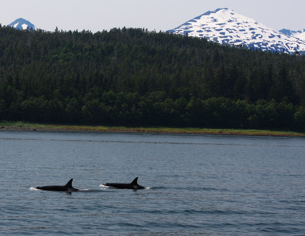 whales in wild