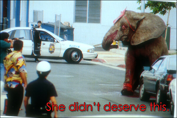 She didn't deserve this, circus tragedy, elephant death