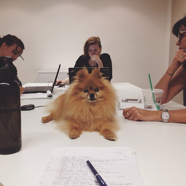 Cole attends important office meetings.