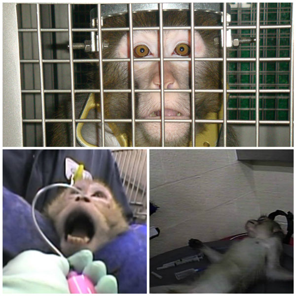 Every year, more than 100,000 monkeys are experimented on in the United States.