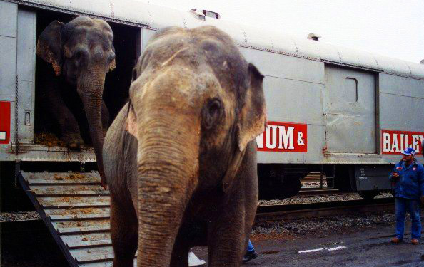 Elephants travel in boxcars like these for up to 100 hours straight.