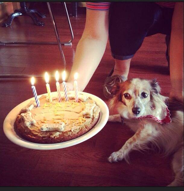 Birthdays aren't just for humans.