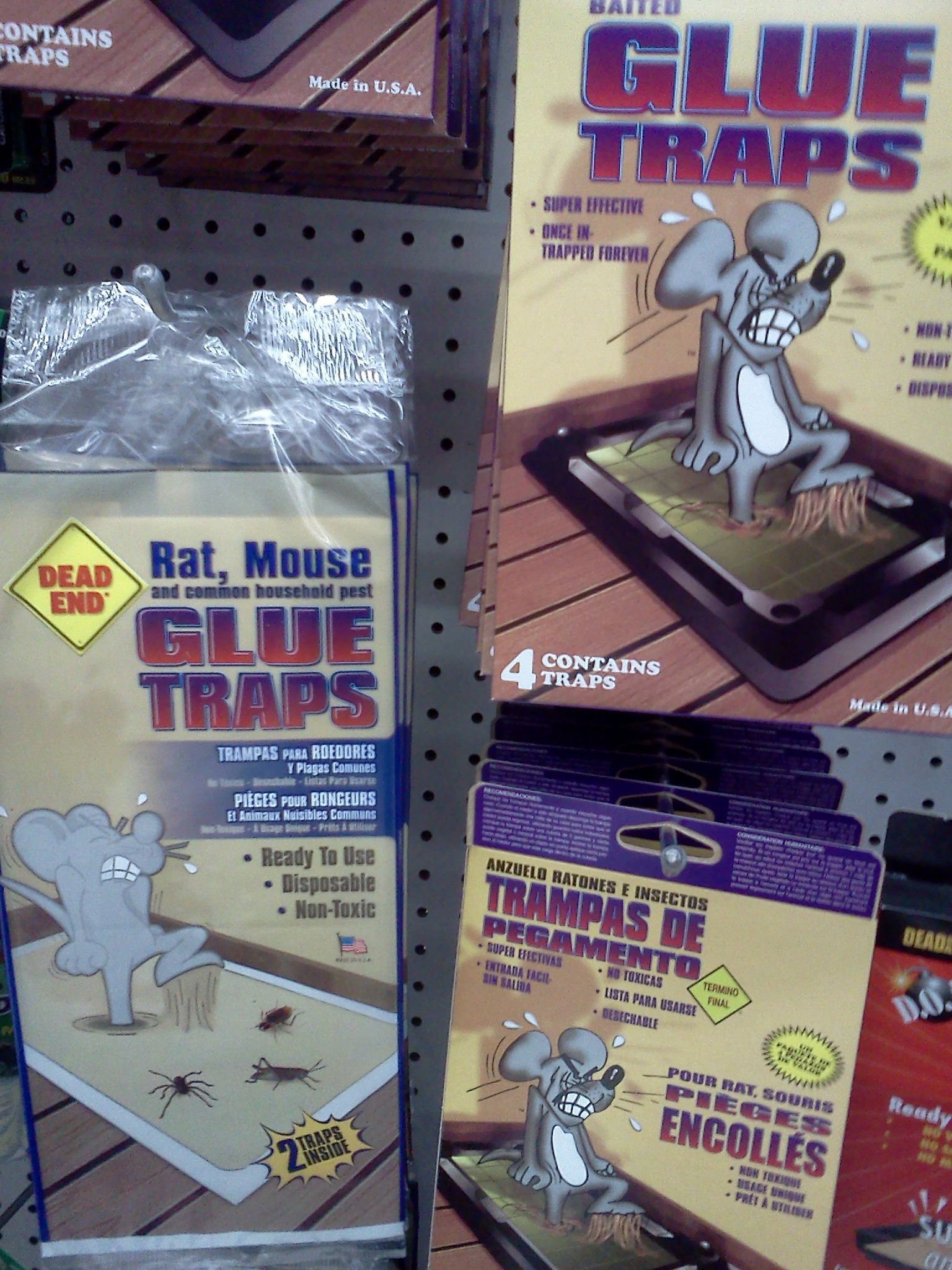 Why You Should Never Use a Glue Trap | peta2