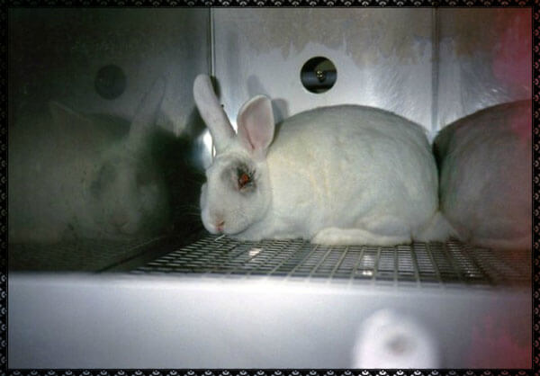 Cosmetics testing is cruel and unnecessary