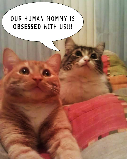 Cats-Looking-Up