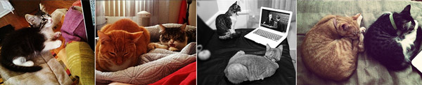 Kitty-Lifestyle-Collage