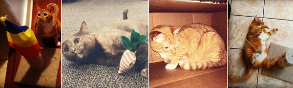 Kitty-Toy-Collage