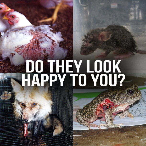 Animals are not ours to eat, wear, experiment on, abuse, or use for entertainment
