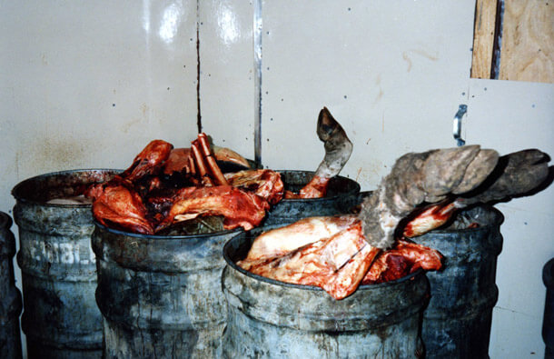 Cow body parts at a slaughterhouse