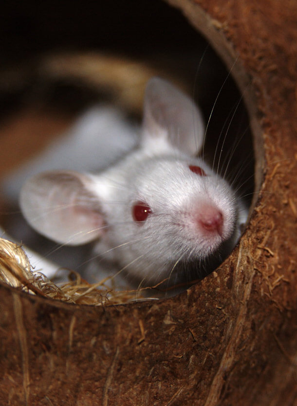 Humane Mouse Removal Guide: 9 Steps for a Rodent-Free Home