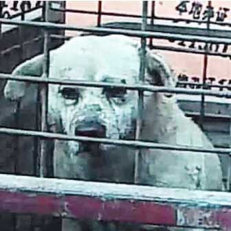 Dogs and cats in China are killed and sold as fur or leather