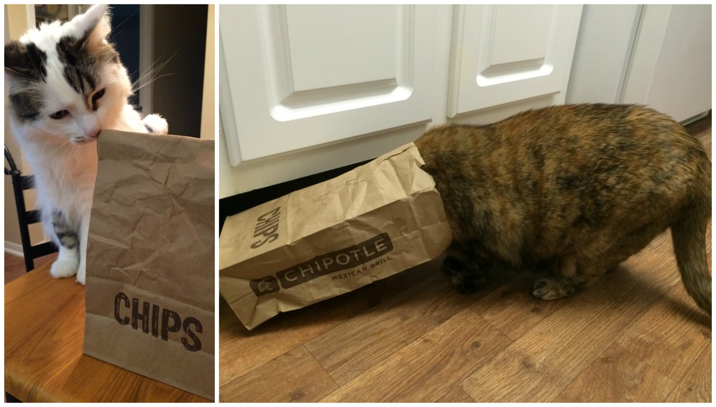 Cat With Chipotle Chips Collage
