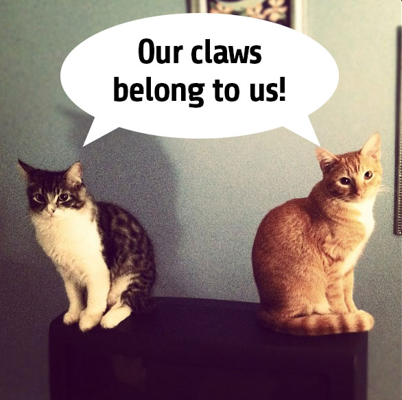 cats declawing