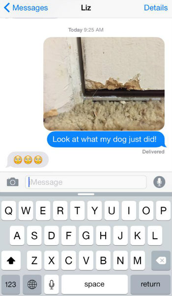 dog text funny