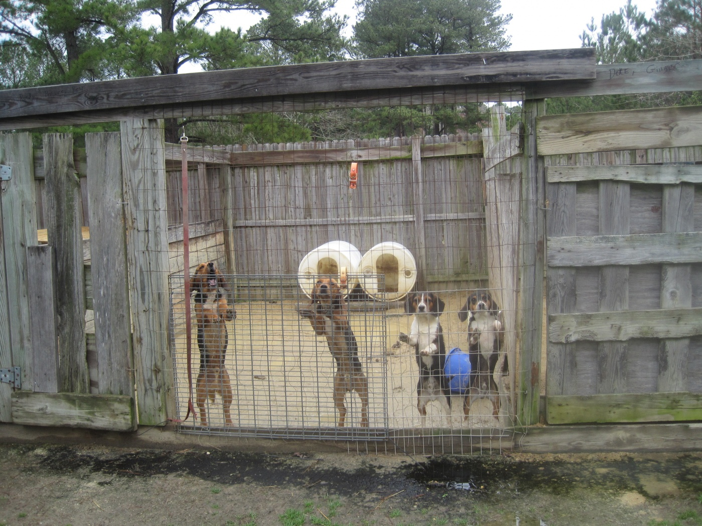 Hunting dogs often kept chained or penned and denied routine veterinary care.