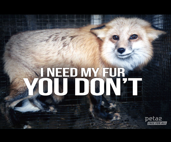 Fox-Used-For-Fur