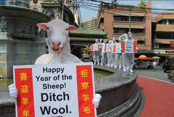 PETA-Asia-Year-of-the-Sheep