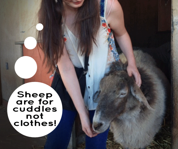 Sheep-Are-For-Cuddles