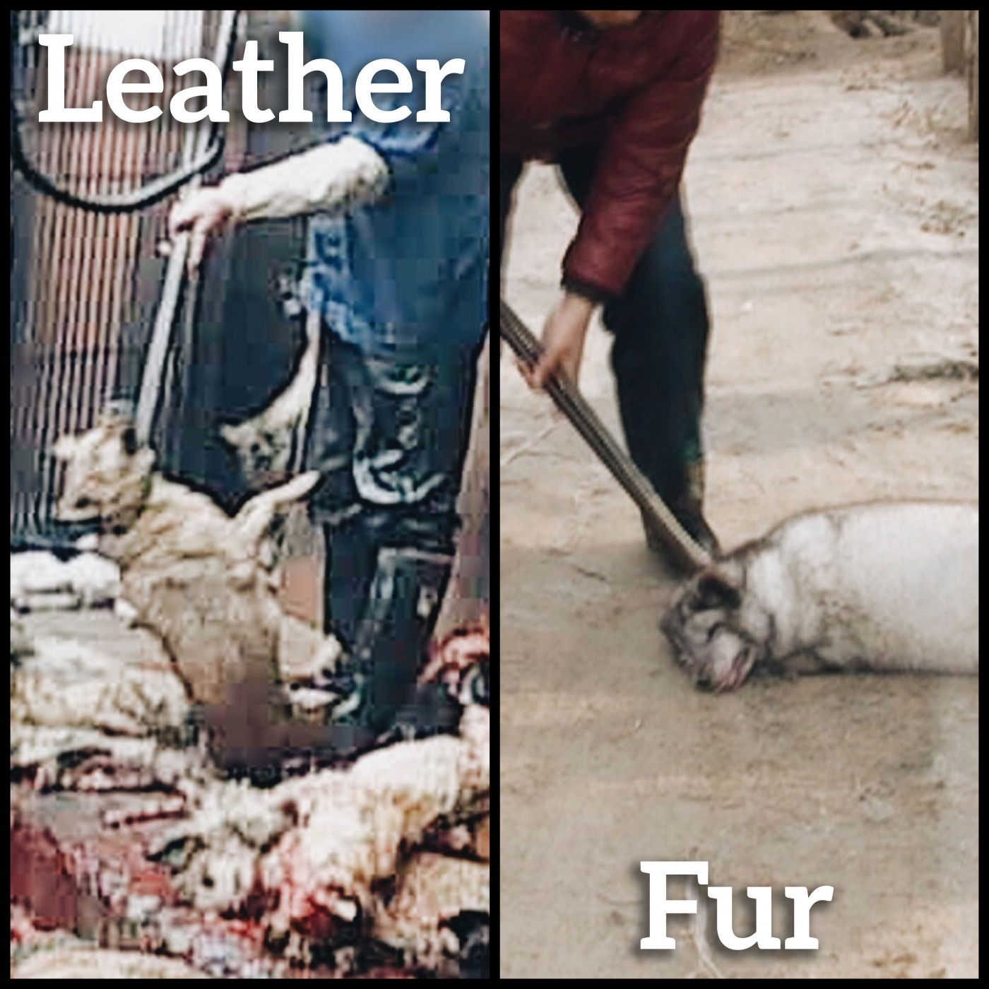 bludgeoned-leather-fur