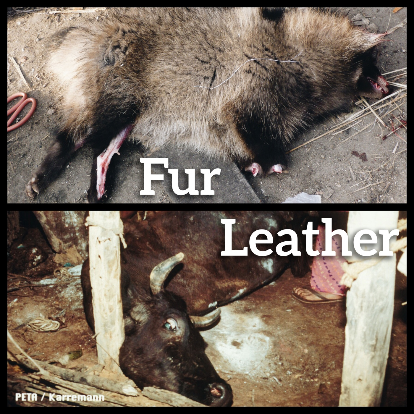Leather Fur Left to Die