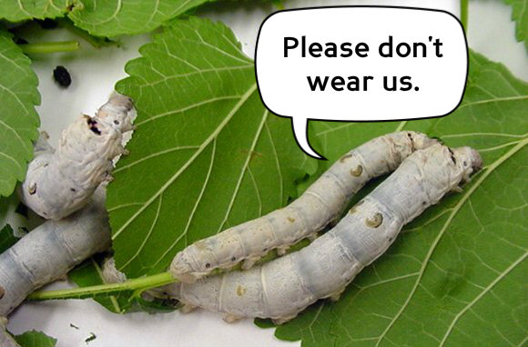 Silkworms with text