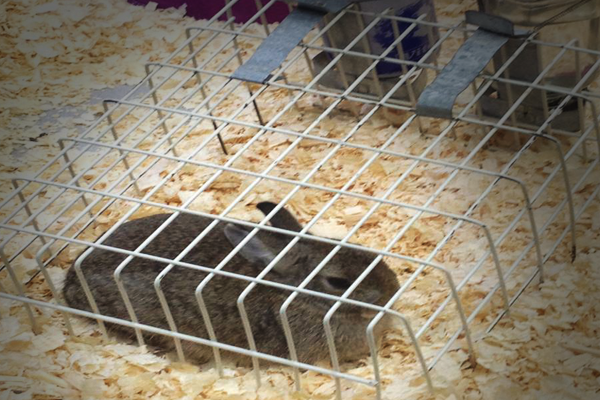 Bunny-in-Tiny-Cage