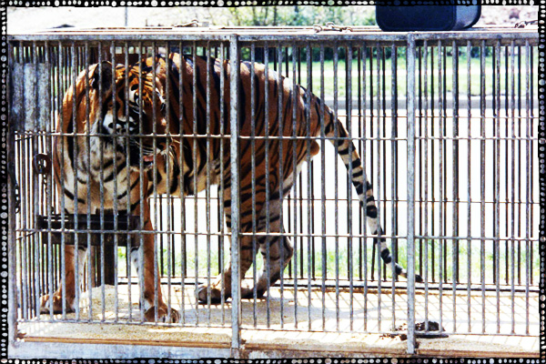 advantages of animals in zoos