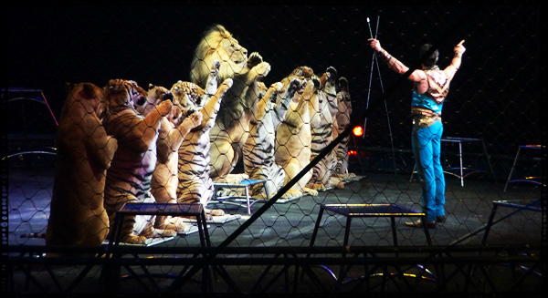 Lions and Tigers Standing