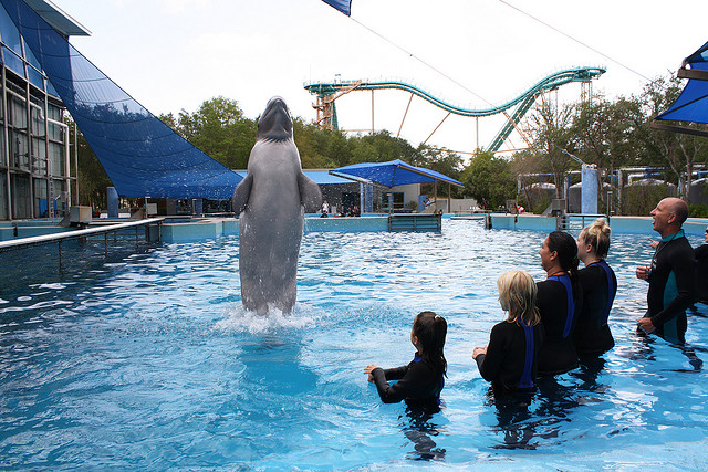 "SeaWorld profits off of keeping belugas in captivity. Visitors pay $119 per person to participate in the park's ""Beluga Interaction Program."""