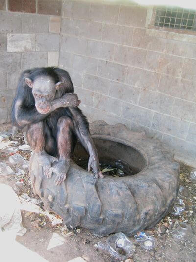 should zoos be banned facts