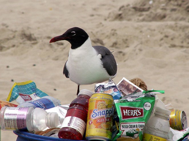 7 Ways to Be Less Trashy for Animals