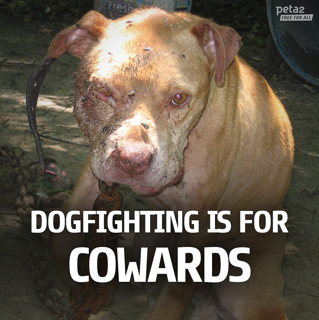 Dog-Fighting-is-for-Cowards-IG-version-peta2