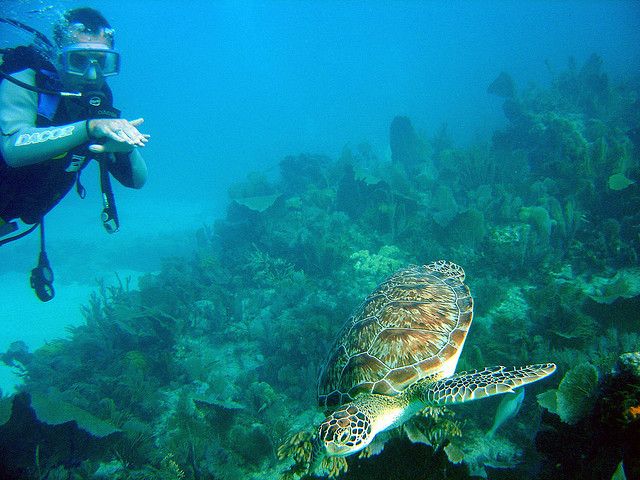 The John Pennekamp Coral Reef State Park