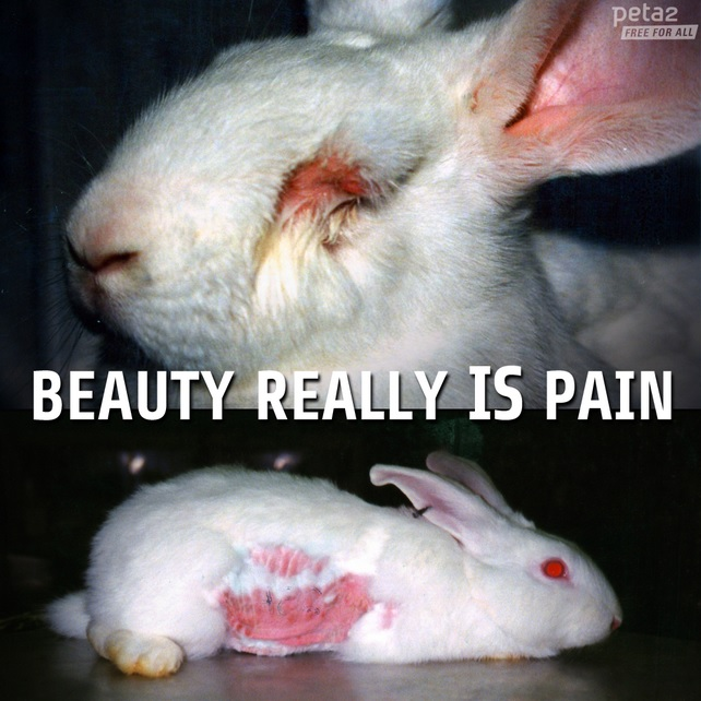 beauty really is pain animal testing rabbit