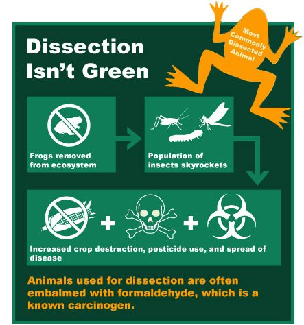 dissection isn't green