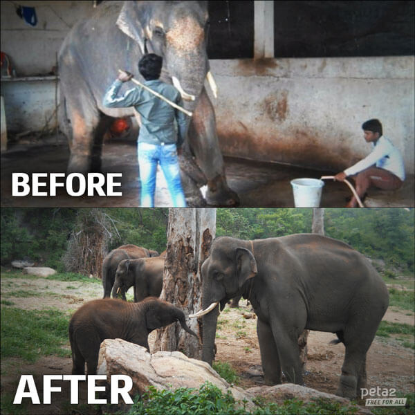 After years in captivity, Sunder enjoys the sanctuary life!
