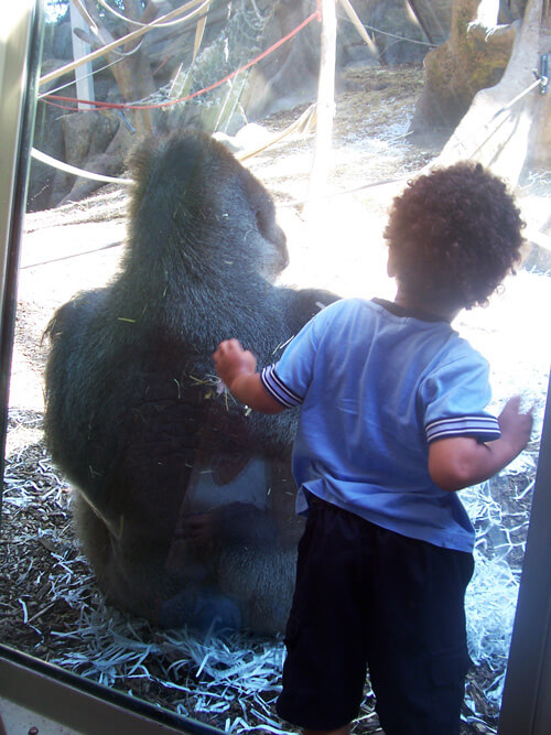 Child-At-Zoo