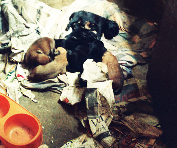Puppies-In-Trash