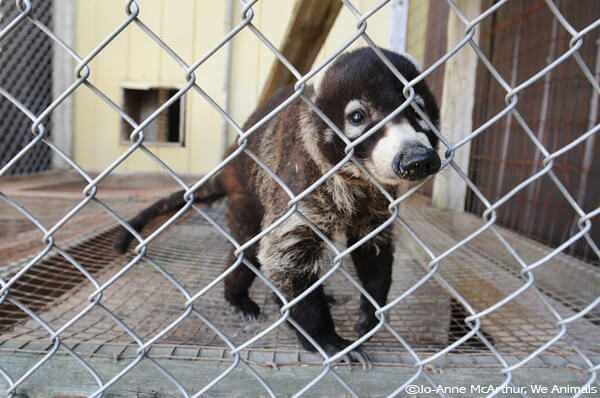 is it cruel to keep animals in zoos