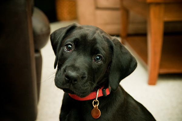 Puppy-With-Collar