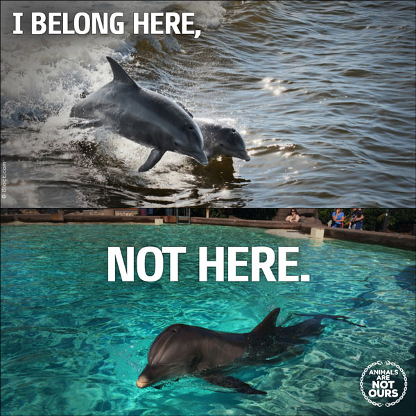 dolphins-belong-here