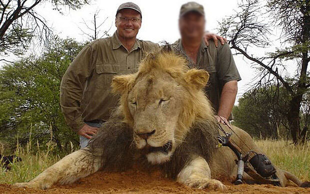 Walter Palmer smiles while posing with the corpse of another lion he had killed with what appears to be a crossbow.