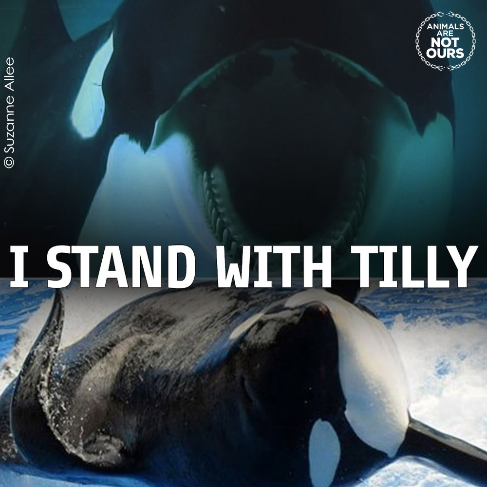 i stand with tilly seaworld