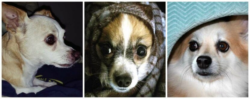 scared dog collage