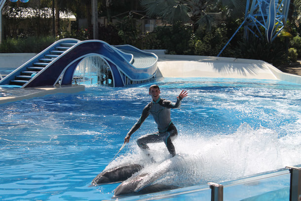 Dolphins aren't your surfboards!