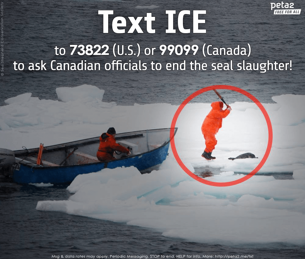 Text Ice Seal Slaughter