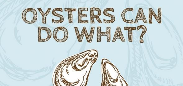 10 Reasons to Not Eat Oysters, Mussels, and Clams