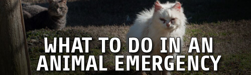 What-to-Do-in-an-Animal-Emergency
