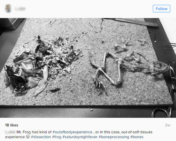 frog dissection instagram picture