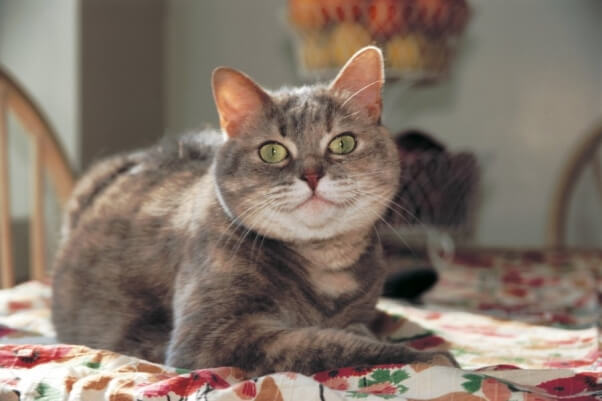 Emmie-the-Cat